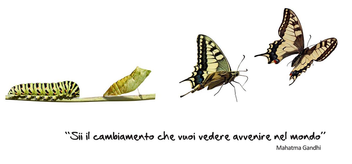 Metamorphosis of the European Swallowtail (Papilio machaon), showing 3 instars: caterpillar, chrysalis and adult.